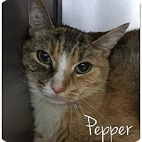 Adopt A Pet :: Pepper - New York, NY