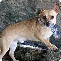 Adopt A Pet :: Buddy - Dalton, GA