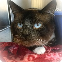 Adopt A Pet :: Tiny - Webster, MA