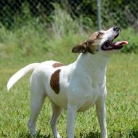 Adopt A Pet :: Chi Chi - Gainesville, TX