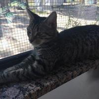 Adopt A Pet :: BECKY-LYNN - Brooksville, FL