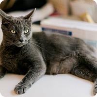 Adopt A Pet :: Misty - Virginia Beach, VA