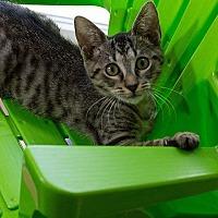 Adopt A Pet :: Bones - Tampa, FL