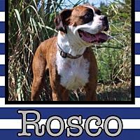 Adopt A Pet :: Rosco - Great Bend, KS