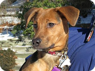 Hound (Unknown Type) Mix Dog for adoption in Stroudsburg, Pennsylvania - Lucy