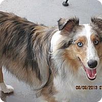 Adopt A Pet :: Skye - apache junction, AZ