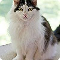 Adopt A Pet :: Ellie Mae - Grand Rapids, MI