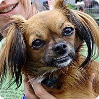 Adopt A Pet :: Katie - Santa Monica, CA