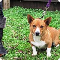 Adopt A Pet :: Donald - Inola, OK