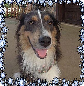 Border Collie Dog for adoption in Houston, Texas - Arnie