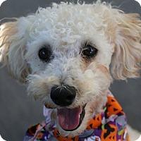 Adopt A Pet :: Romeo - La Costa, CA