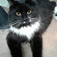 Adopt A Pet :: Tennessee - Taylor, MI