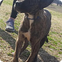 Hound (Unknown Type) Mix Dog for adoption in Tuttle, Oklahoma - Cami