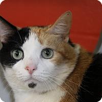 Adopt A Pet :: Giga - Sarasota, FL