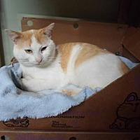 Adopt A Pet :: Thomas - Montello, WI