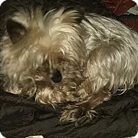 Adopt A Pet :: Simon - Butler, OH