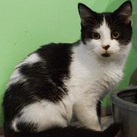 Adopt A Pet :: Jacque - Newburgh, IN