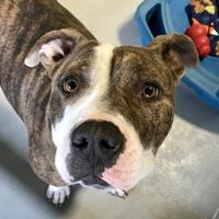 Adopt A Pet :: Herbert - Clarksdale, MS
