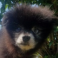 Adopt A Pet :: Cole - Shelbyville, TN