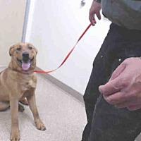 Adopt A Pet :: LEO - Palmer, AK