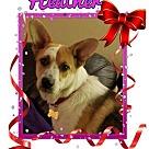 Adopt A Pet :: Heather
