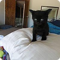Adopt A Pet :: Bambi - Phoenix, AZ