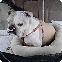 Adopt A Pet :: Gracie - conyers, GA