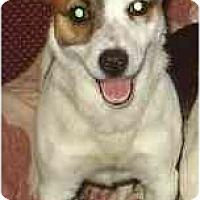 Adopt A Pet :: Doodles - cedar grove, IN
