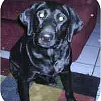 Adopt A Pet :: Angus - Gilbert, AZ