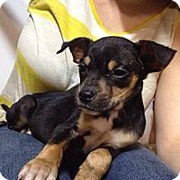 Adopt A Pet :: Perry - Marlton, NJ