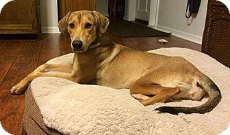 Hound (Unknown Type) Mix Dog for adoption in Gainesville, Florida - Nina