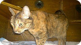 Domestic Mediumhair Cat for adoption in New York, New York - Mystery