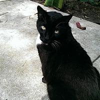 Adopt A Pet :: Cocoa - Naples, FL