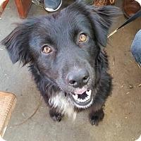 Adopt A Pet :: Luna - Austin, TX