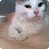 Adopt A Pet :: CAMMIE - Brea, CA