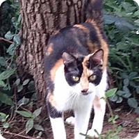 Adopt A Pet :: Autumn - Witter, AR