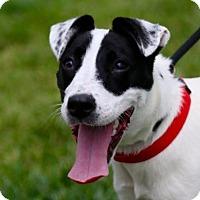 Adopt A Pet :: Quinn - St. Charles, MO