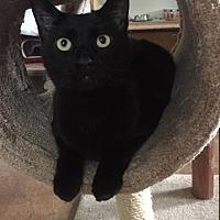 Adopt A Pet :: Scotty the conversationalist! - Cincinnati, OH