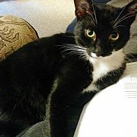 Adopt A Pet :: Fabi - Vancouver, BC