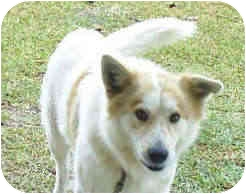 Husky Mix Dog for adoption in Portsmouth, Rhode Island - Chance