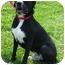 Photo 1 - Boxer/Labrador Retriever Mix Dog for adoption in Somerset, Pennsylvania - Chance