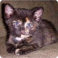 Adopt A Pet :: Buttercup - Davis, CA