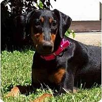 Adopt A Pet :: Nyah--adopted! - New Richmond, OH