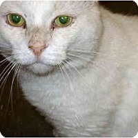 Adopt A Pet :: Miracle - Greenville, SC