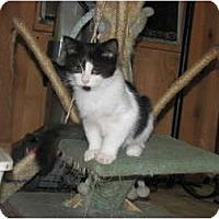 Adopt A Pet :: Lilliputtin - Richfield, OH