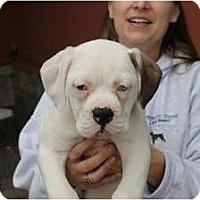 Adopt A Pet :: Zeeva - ARDEN, NC