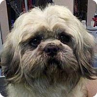 Adopt A Pet :: Rufus - Seattle, WA