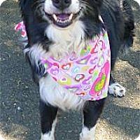 Adopt A Pet :: Harmony gentle kind soul - Sacramento, CA