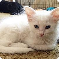 Adopt A Pet :: Asia - N. Billerica, MA