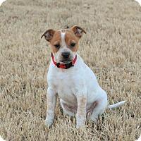 Adopt A Pet :: Sunshine - Bedminster, NJ